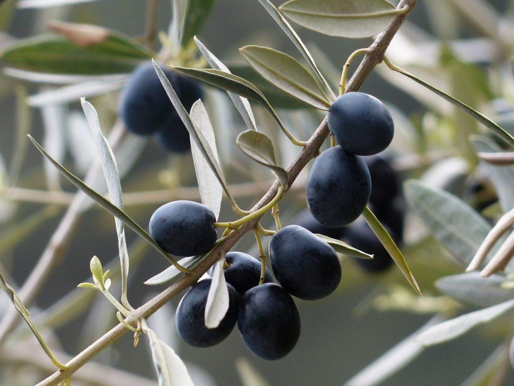 Good olive oil (dobro maslinovo ulje)