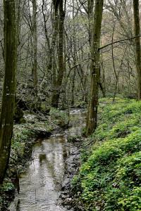 Fruškogorski biseri / The wonders of Fruska gora