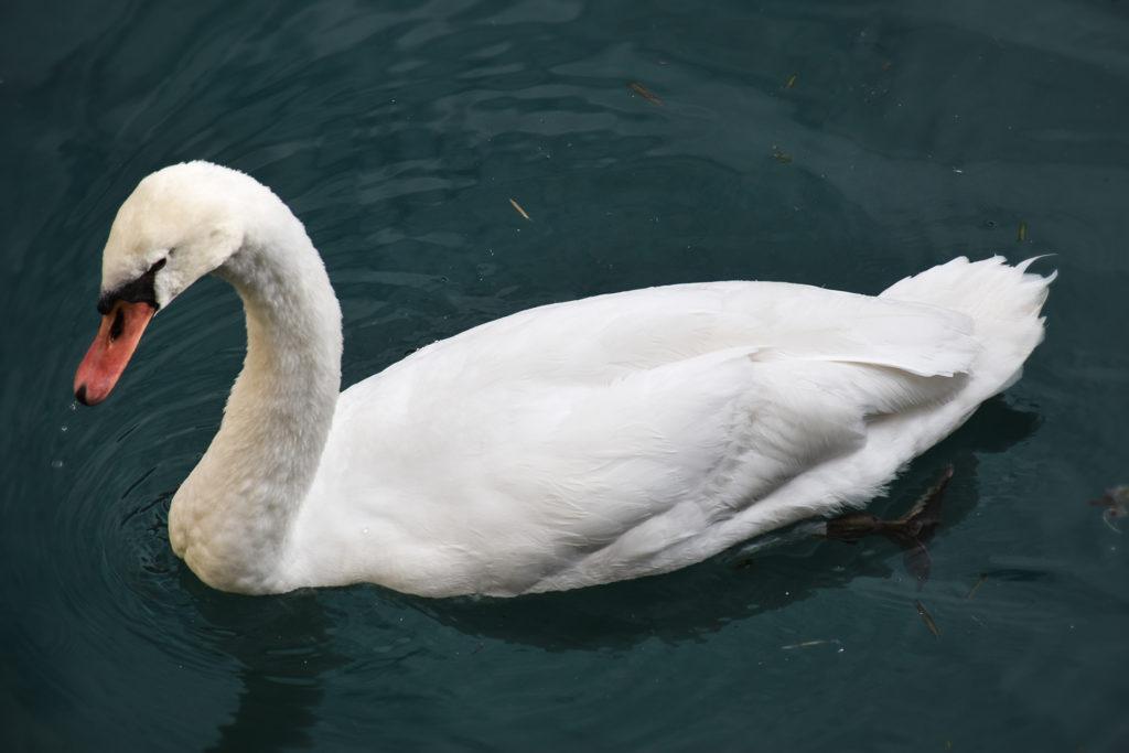 Sirmione, Lago di Garda