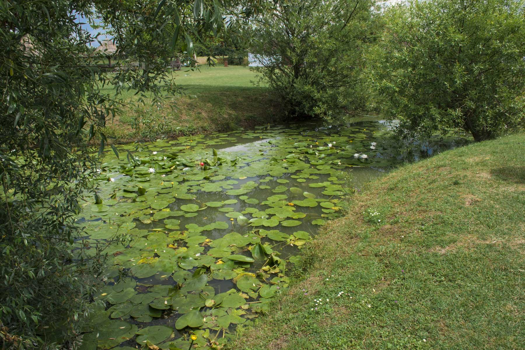 Frog habitat. Visit Zasavica