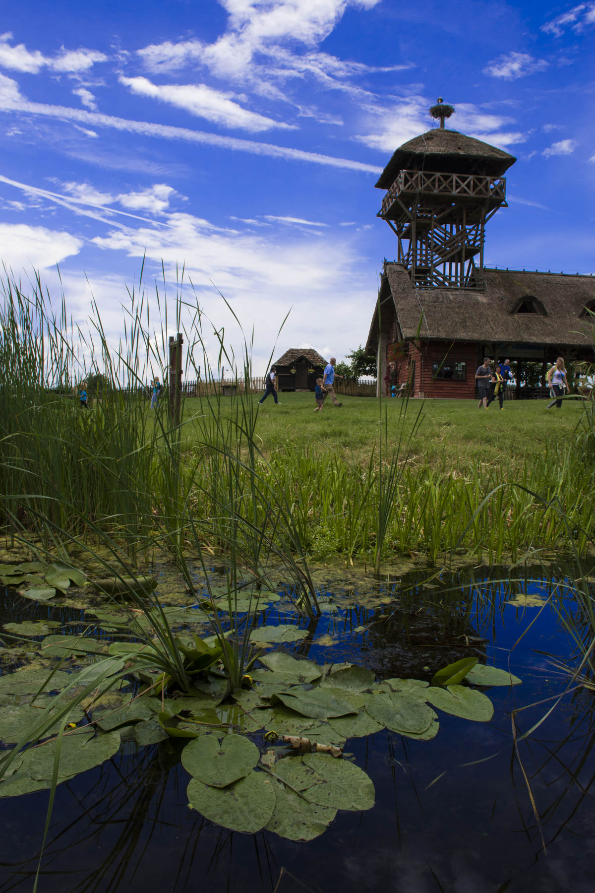 View on the tower from the swamp. Visit Zasavica