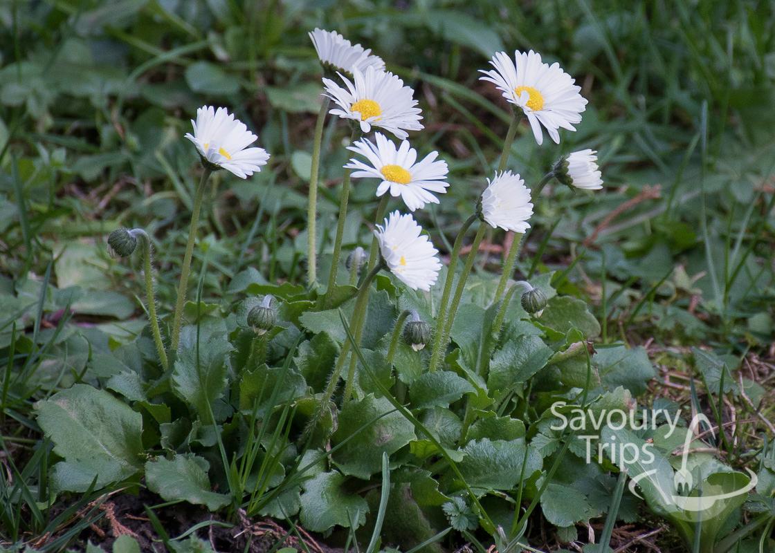 Proleće u Bašti by Savoury Trips
